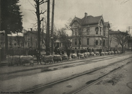 Training goats on Morrison St., circa 1904 : A2004-002.139