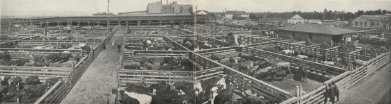 View of the Portland Union Stock Yards, 1919: A2004-002.1093